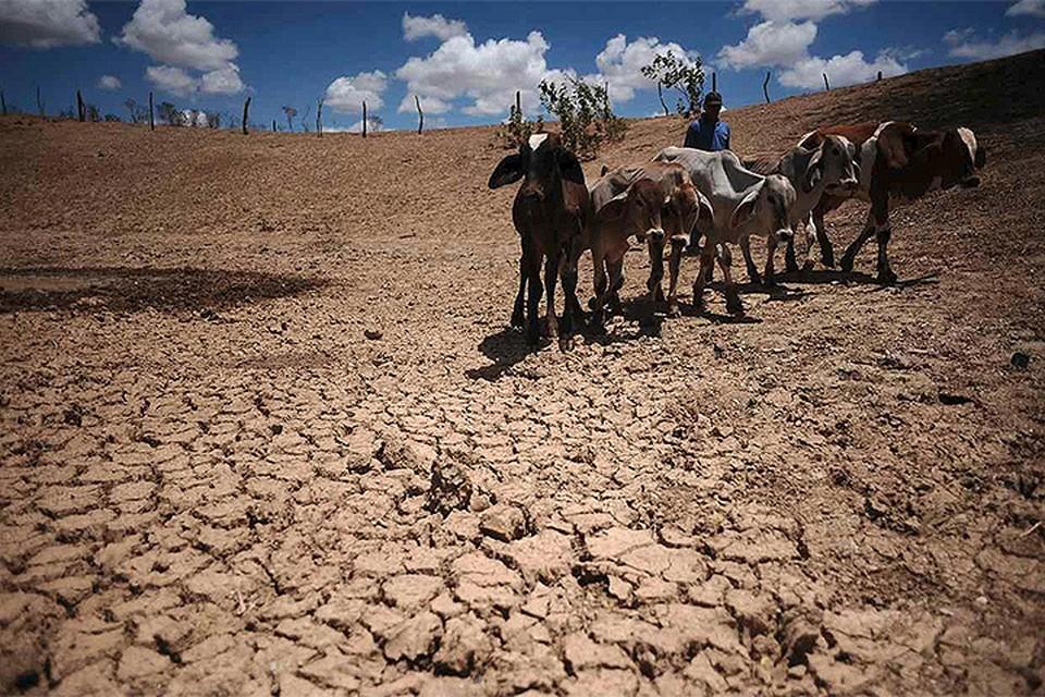 Глобальные изменения климата не призрак и не миф. Это реальность с которой мы будем сталкиваться в самое ближайшее время, делают вывод ученые