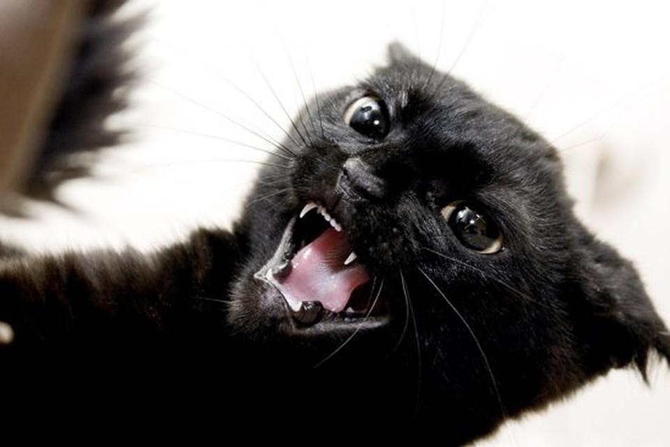 Днем космонавтики, открытки злые кошки
