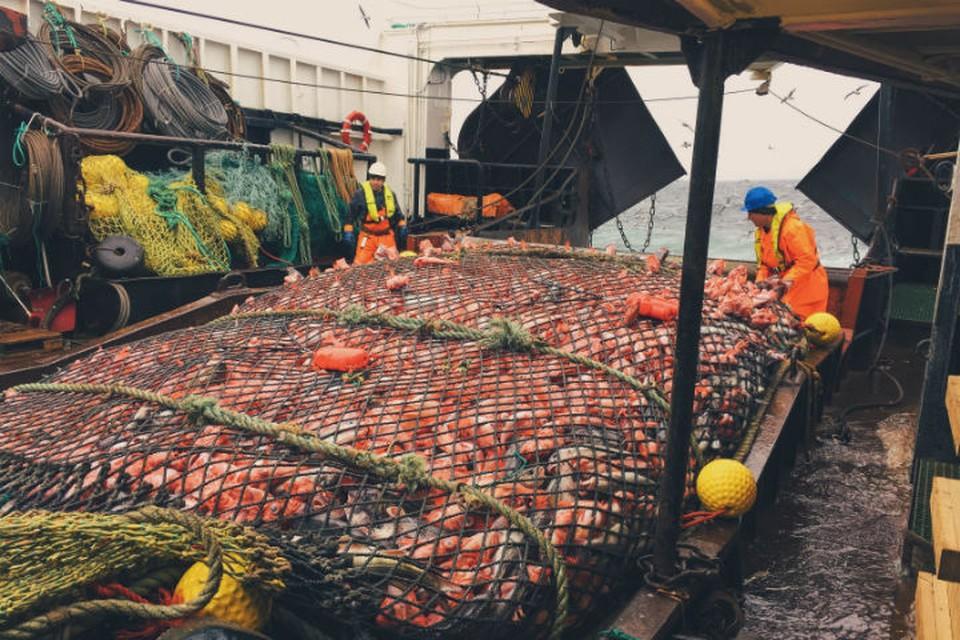 Трал захватывает десятки и сотни килограммов рыбы. И часто среди такого улова можно найти удивительных рыб. Фото: Роман ФЕДОРЦОВ