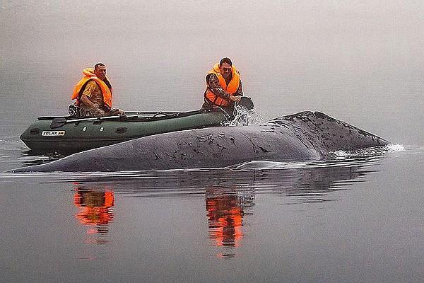 Застрявший неподалеку от Хабаровского края кит уже освобожден