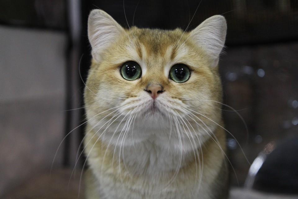 Чтобы научиться понимать основные потребности и настроения кошек, достаточно знать всего лишь семнадцать слов