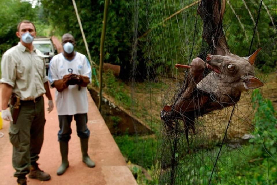 Приморские ученые определили в Африке эпицентры Эболы