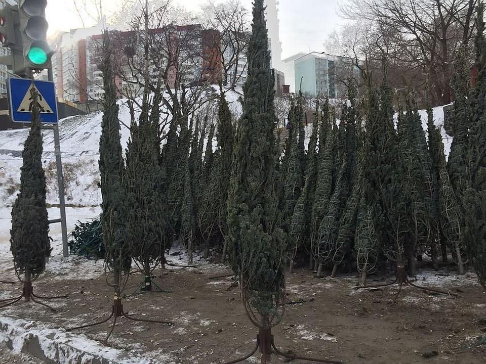 Мэр Владивостока знает, как бороться с выброшенными елками