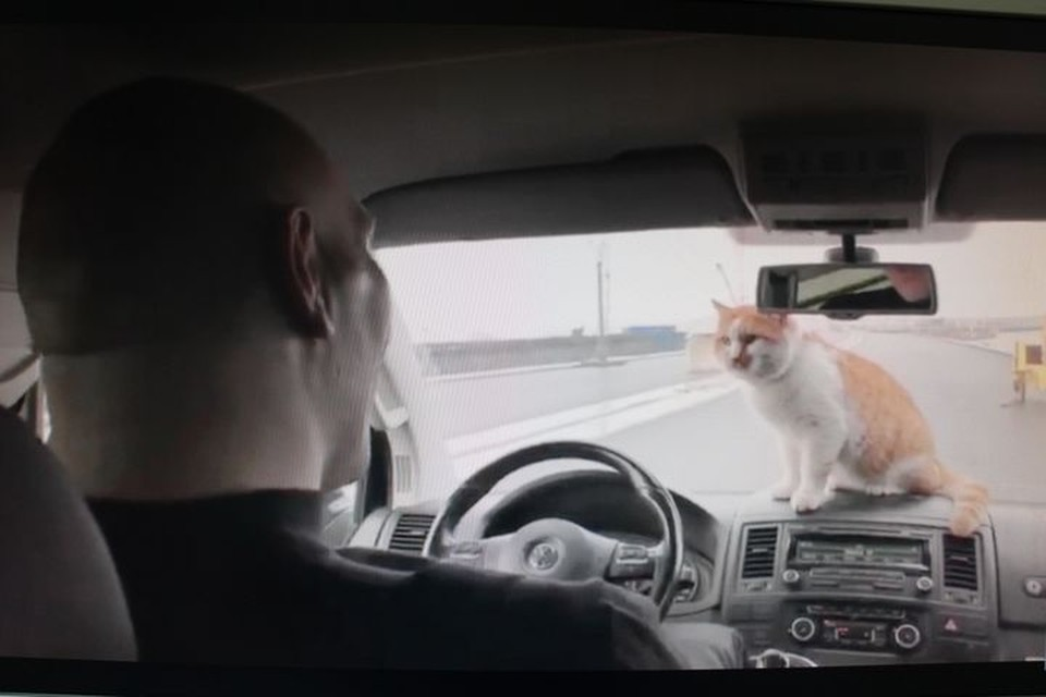 Спортсмен и кот вместе побывали на масштабном объекте. Фото: кадр видео.