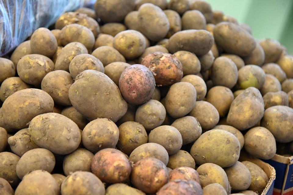В Новосибирске должник по кредитам прятался в мешке с картошкой от судебных приставов.