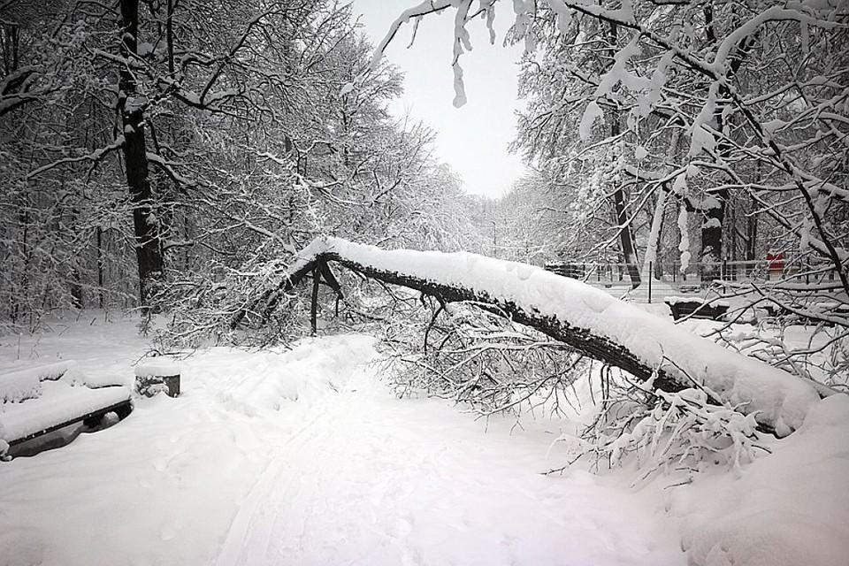 Погода в Москве 10 февраля будет облачной, местами пройдет небольшой снег