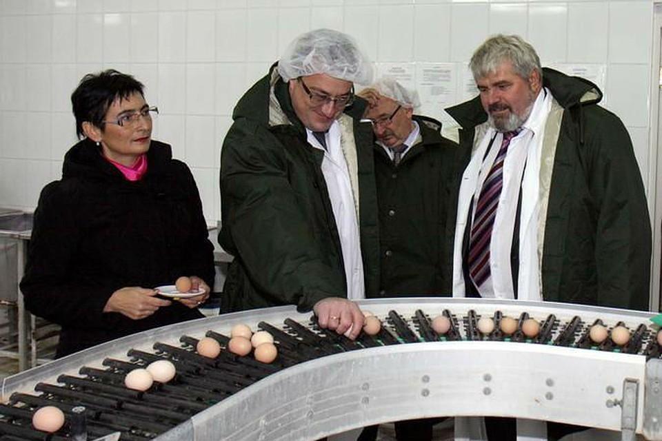 1 млрд 450 млн руб. в качестве дивидендов перечислила птицефабрика «Метлизингу».