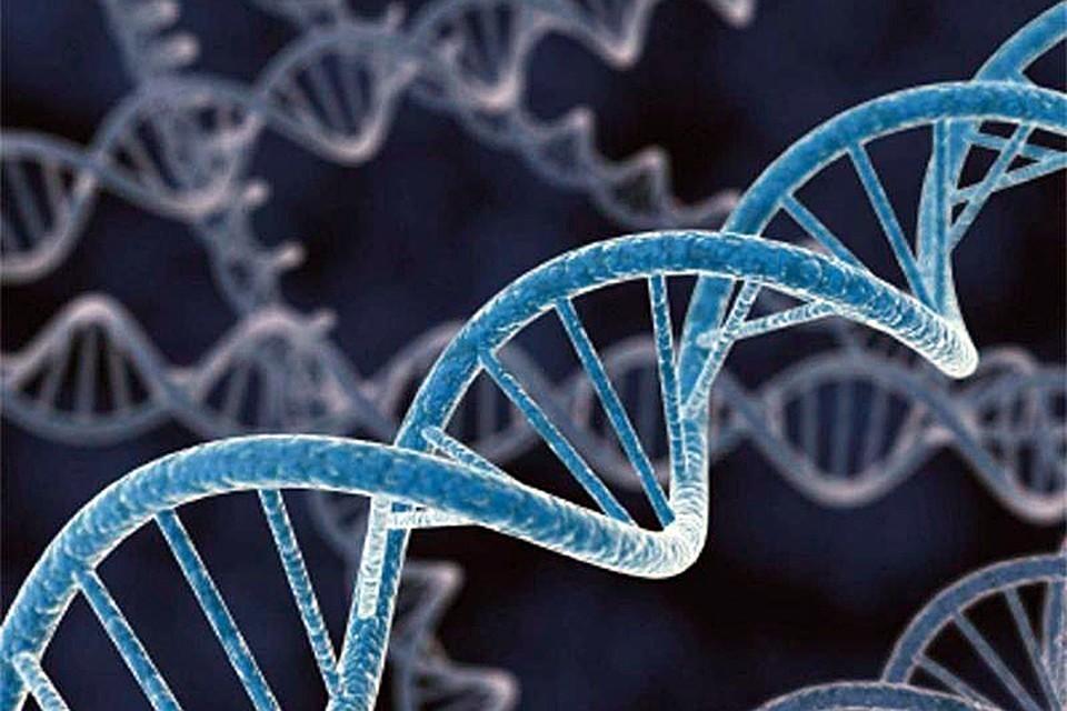 """Ранее в некоторых исследованиях предполагалось существование ДНК в запутанной форме, обозначенной как """"скрученный узел"""""""