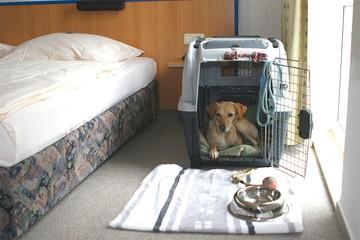 Где можно отдыхать с животными в отеле: Поселят ли в отель в России туристов с домашними животными