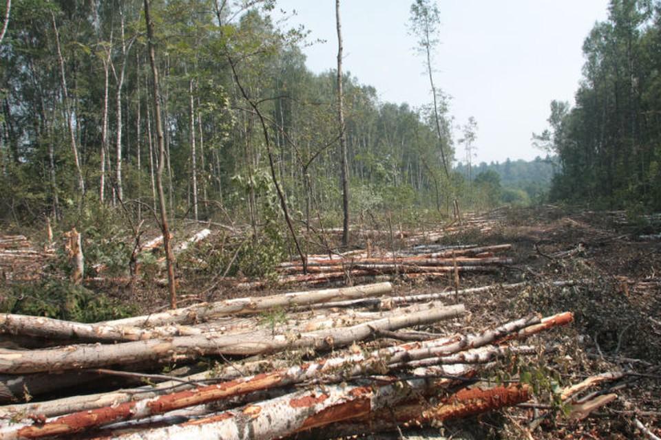 На 880 миллионов рублей вырубили реликтового леса в заказнике Иркутской области