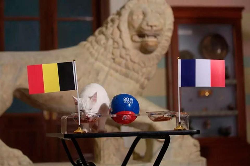Кот Ахилл предсказал победу Бельгии в полуфинале чемпионата мира по футболу.