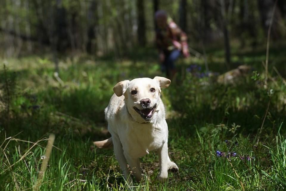 Перевозка животных без сопровождения хозяина будет стоить от 730 рублей