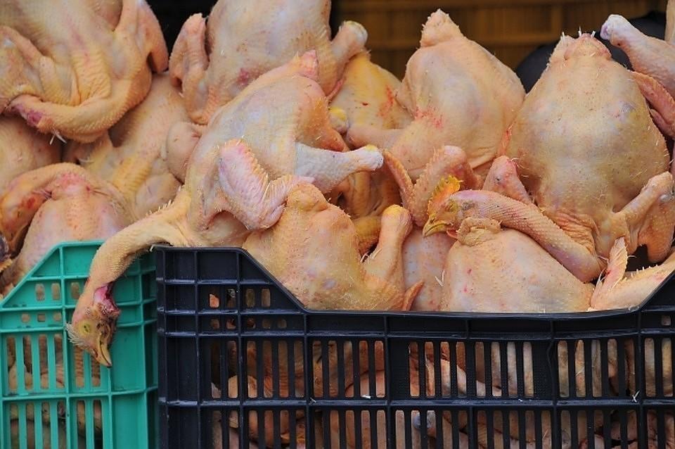 ЕС ввел ограничения на поставки из России мяса птицы и продукции из него