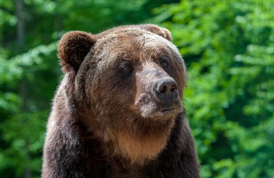 Медведь напал на каякера в Канаде