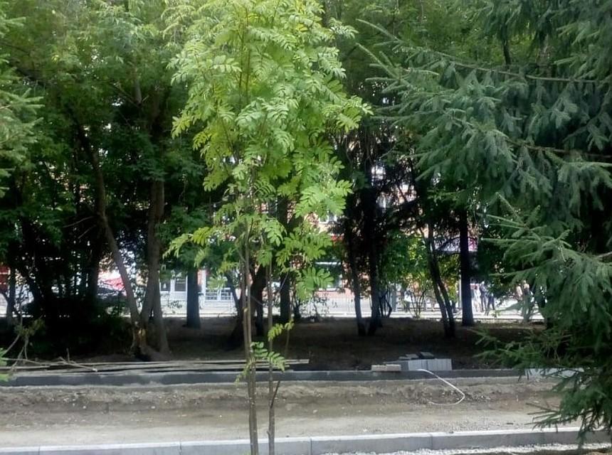 На проспекте Кирова в Томске высадили 40 новых деревьев