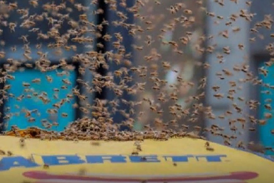 Пчелы облепили палатку с хот-догами в Нью-Йорке. ФОТО: стоп-кадр с видео