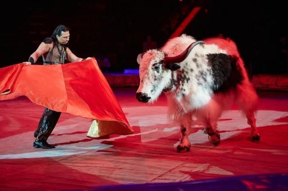 Новая программа - это экзотика и много животных. Фото: Тверской цирк