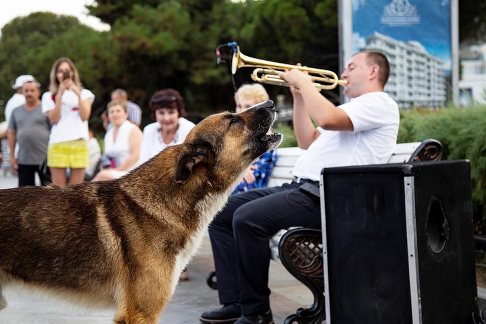 Собака и человек - настоящие друзья.