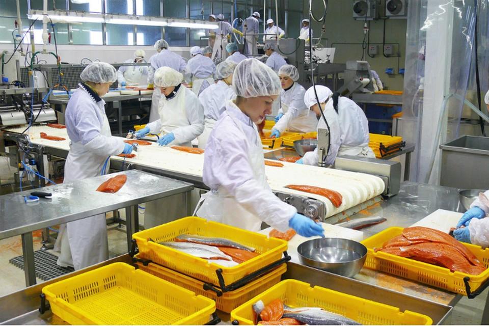На Камчатке построили новый завод по переработке минтая ФОТО: Министерство по развитию Дальнего Востока