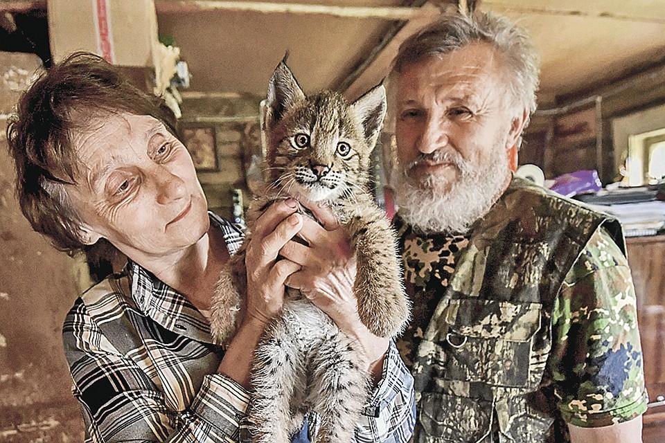 Ученый Алексей Мурашов и его жена Яна не только лечат диких зверей, но и растят их потомство, а потом выпускают юнцов в лес. Вот-вот и этого рысенка отправят на волю.