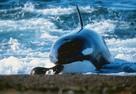 Незаконный вылов и антисанитария: прокуратура Приморья рассказала об итогах проверки «китовой тюрьмы»