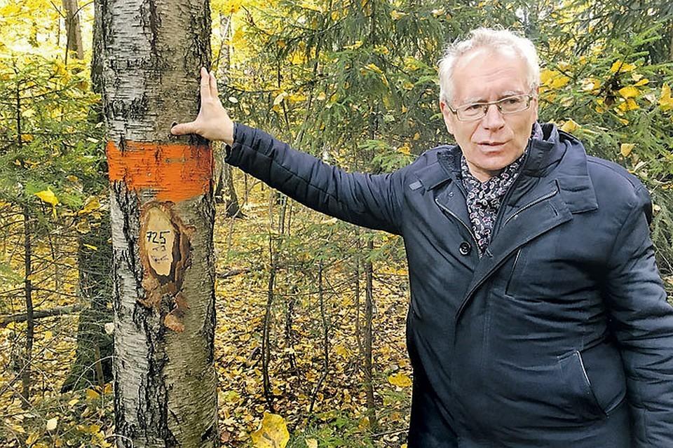 Деревья продлевают жизнь, уверены ученые