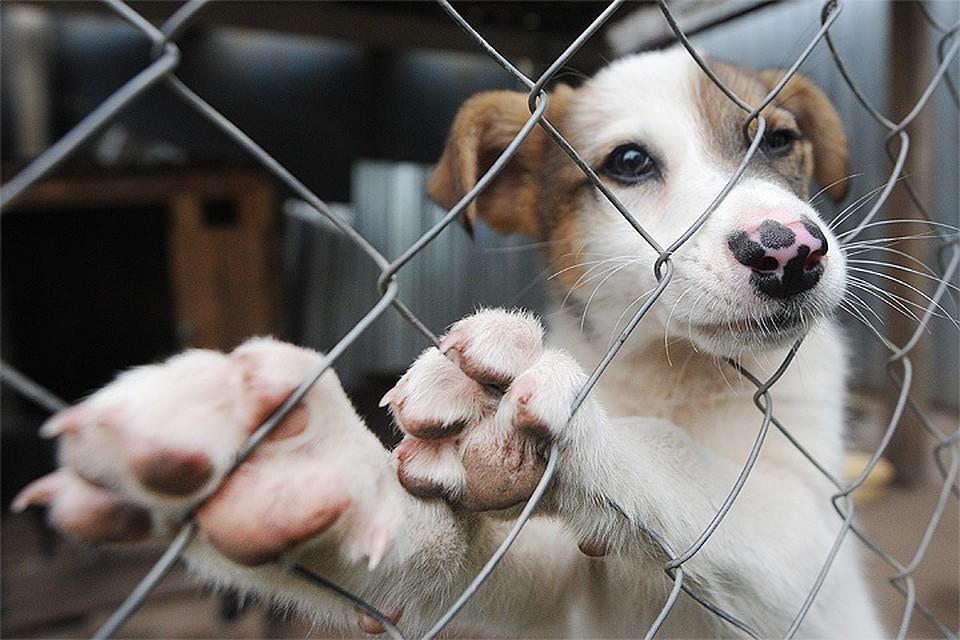 Кроме того, до середины февраля в городе нельзя будет продавать и покупать домашних животных