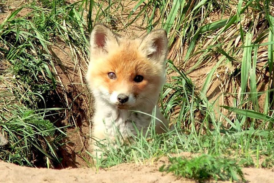 Здесь можно встретить разных животных. Фото: vk.com/public_nurgush