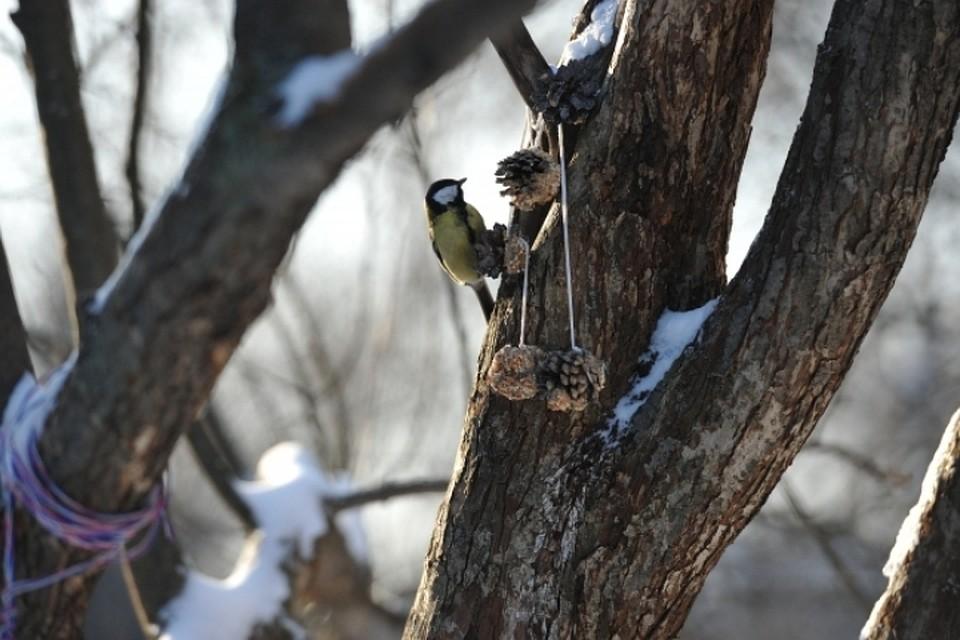 Специалисты рассказали жителям столицы, чем подкармливать птиц в морозы