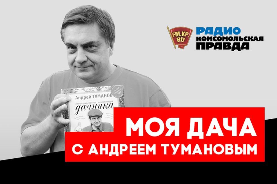 Какие грибы можно вырастить на своём участке, разбираемся в подкасте «Моя дача» Радио «Комсомольская правда»
