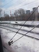 В феврале в дождливый серый день проскакал по Владимиру олень
