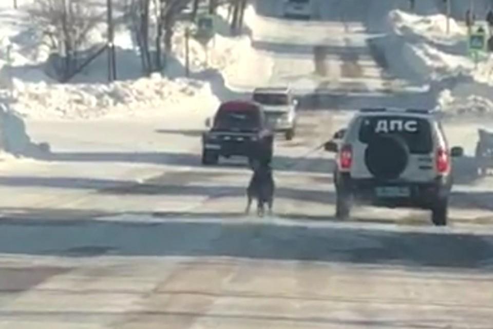 «Я так тренировал служебного пса»: начальник городской полиции на Сахалине объяснил, зачем протащил собаку по дороге