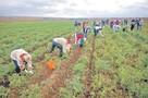 Фермеров загоняют в долговое рабство