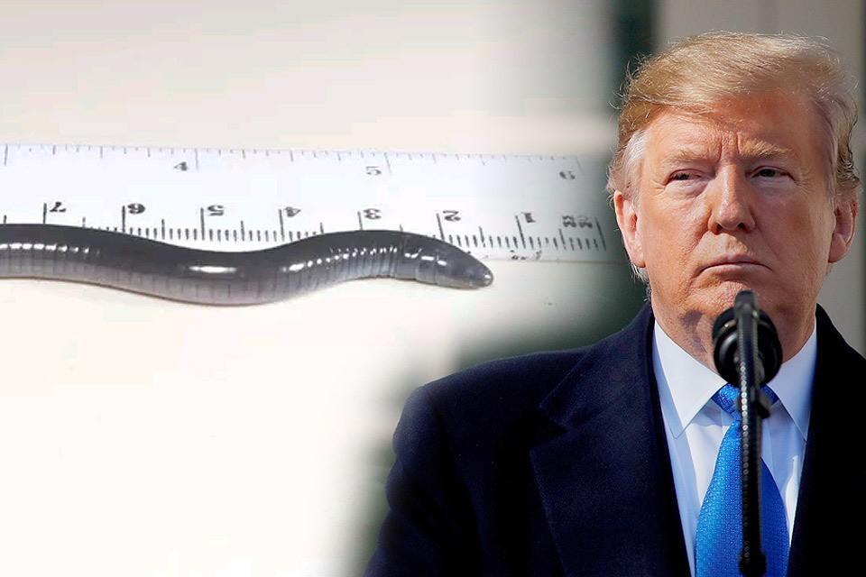 Червеобразную амфибию, обнаруженную в Панаме, назвали в честь президента США Дональда Трампа - Dermophis donaldtrump.