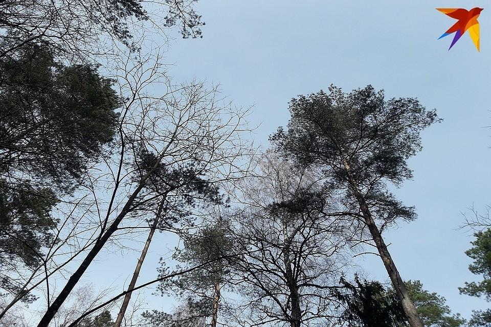 В Пуховичском районе девочка на велосипеде заблудилась в лесу - искали МЧС и милиция.