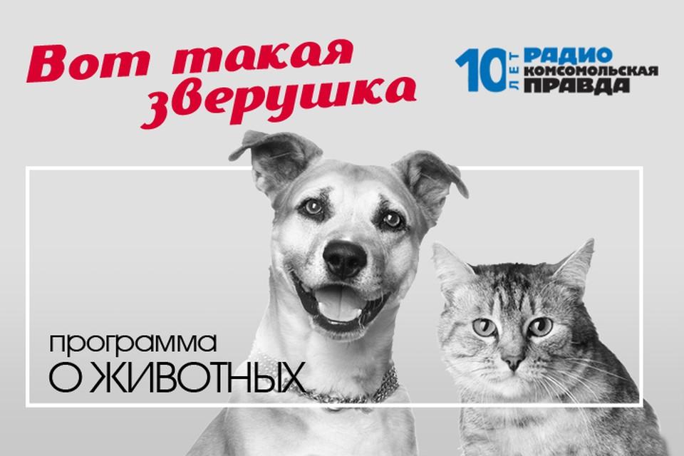 Ветеринарный врач Илья Середа дает бесплатную консультацию и отвечает на вопросы слушателей