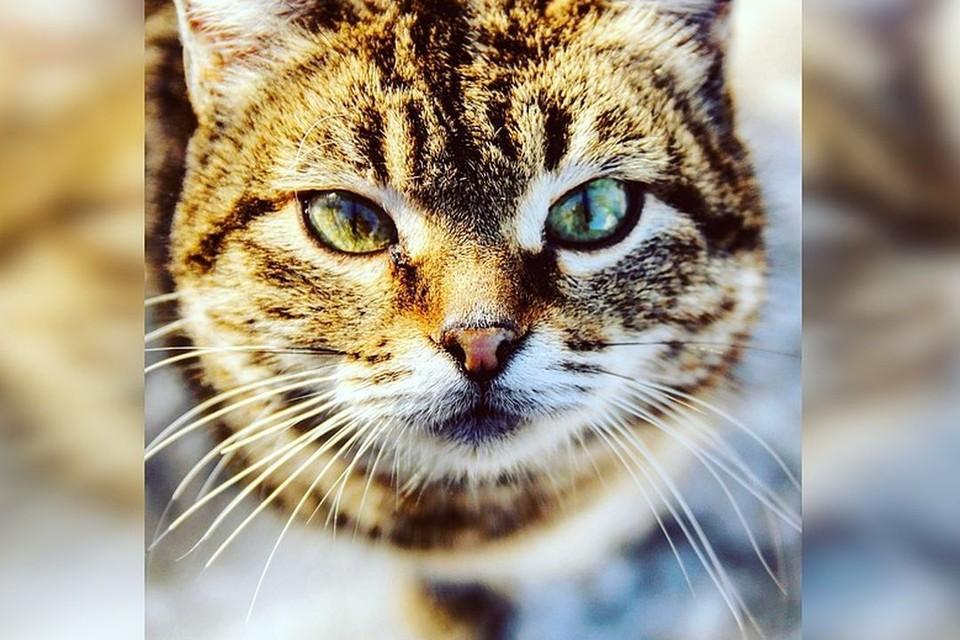 Зоозащитники помогают 40 кошкам, живущим в подвале жилого дома.