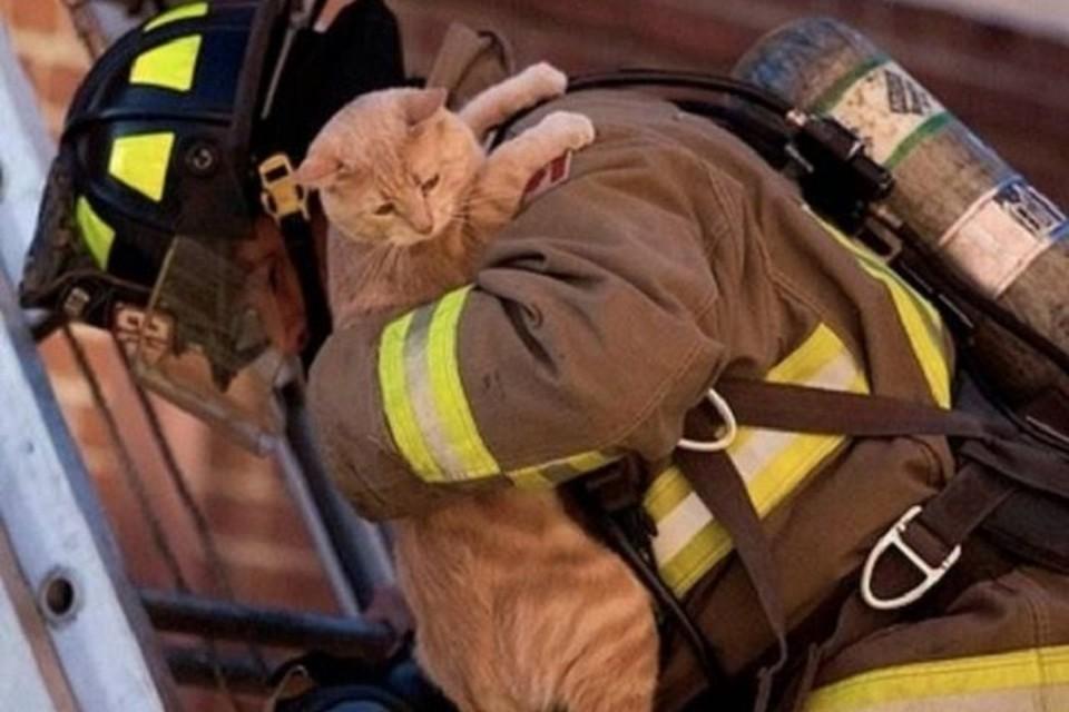 В соцсетях обсуждают спасение бездомного котенка. Фото: pitomzy.com