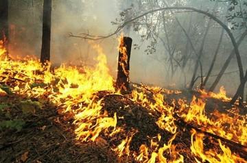 Кинул окурок – спалил 8 гектаров леса: сибиряка осудили за поджог березовой рощи в Иркутской области