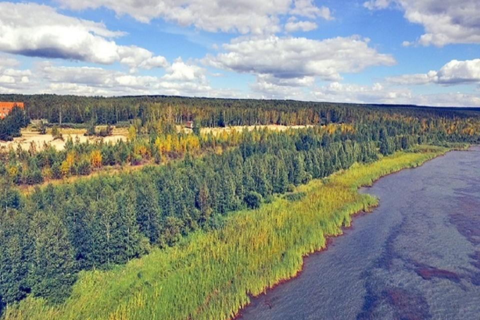 По поручению президента на место вырубки деревьев в Щучинско-Боровской курортной зоне направлены специалисты, проводится расследование.