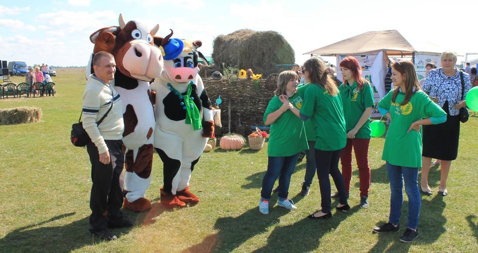 Веселая сценка с ростовыми куклами коров на одном из предыдущих фестивалей