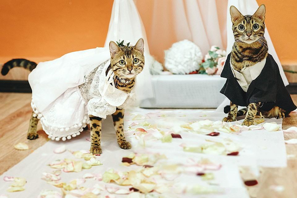картами картинки с кошками о свадьбе организации профессиональных