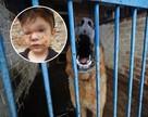 «Сын плачет по ночам и стесняется своего лица в шрамах»: на Урале немецкая овчарка напала на 3-летнего малыша