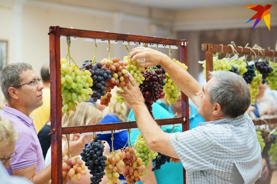 Праздник «Виноградная гроздь Орловщины – 2019» пройдет в эту субботу