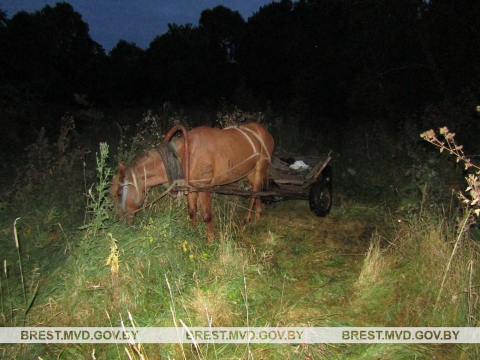 В Столинском районе задержали браконьеров Фото: brest.mvd.gov.by