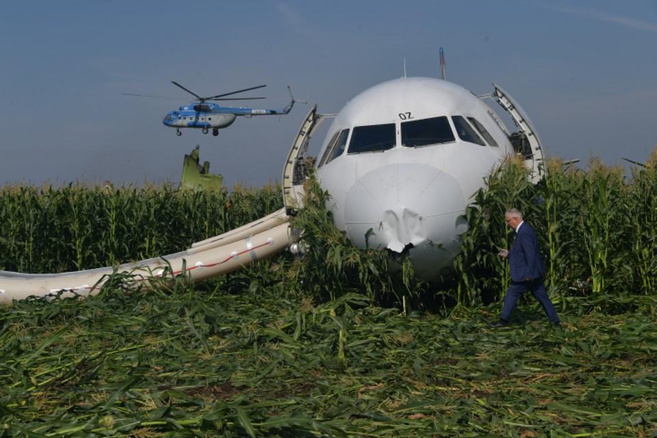 Самолет А-321 экстренно приземлился на поле кукурузы 15 августа.