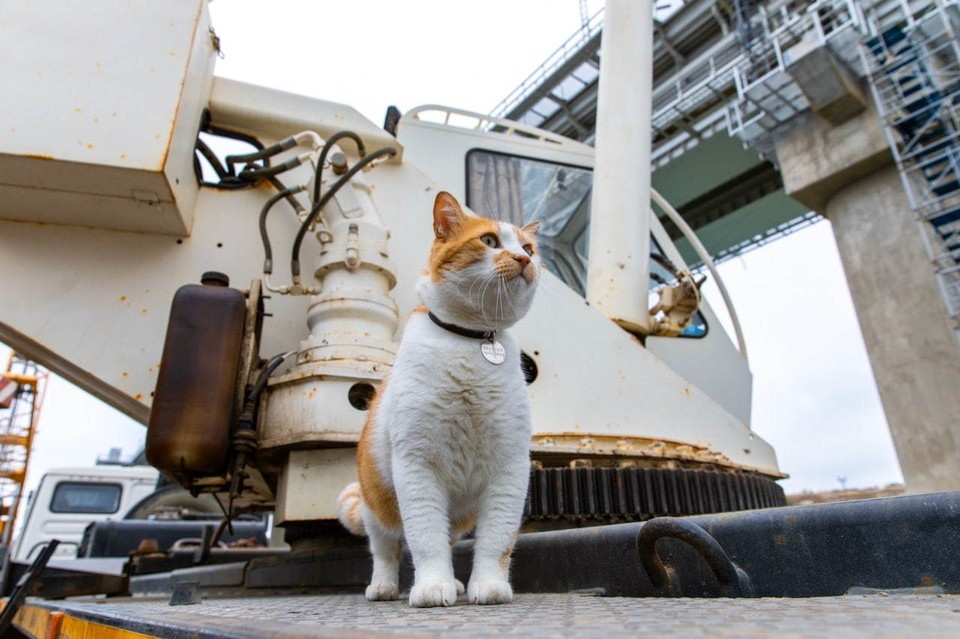 Хорошего кота много не бывает. Фото: кот Моста/VK