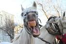 «Он издевается над нами!»: Мужчина почти два года не дает спасть соседям, включая лошадиное ржание