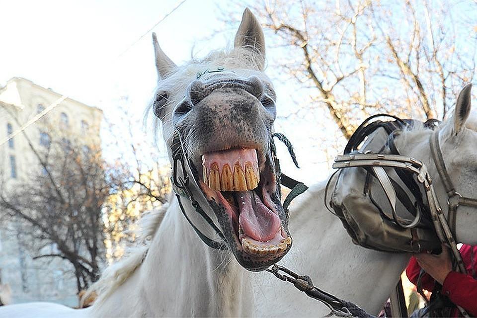 Мужчина почти два года не дает спасть соседям, включая лошадиное ржание