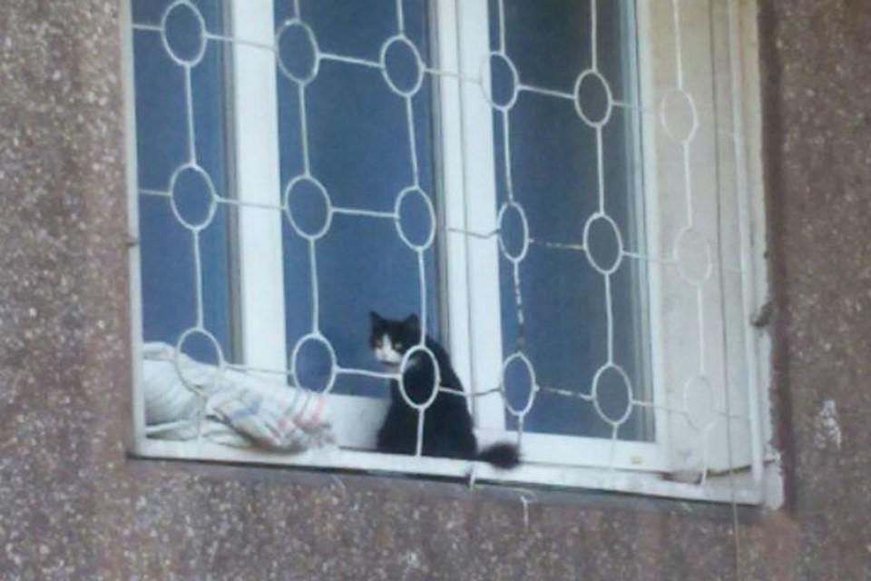 Беременная кошка две недели просидела на подоконнике в надежде, что ее пустят домой.